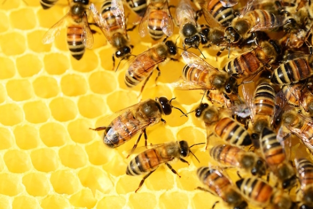 A swarm of bees are a clear sign of collective intelligence