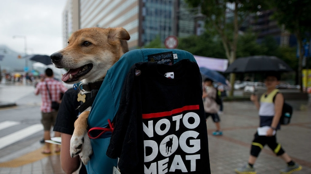 UK Wants S. Koreans To Stop Eating Dogs: Why Do Brits Want To Impose Their Dietary Culture On Others?