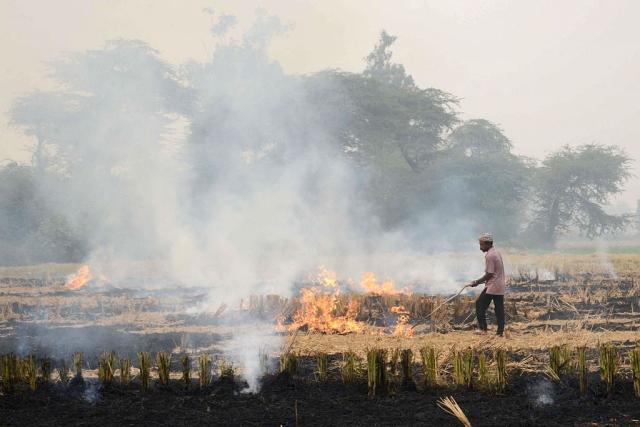Paddy stubble burning in Punjab (NARINDER NANU/AFP/Getty Images)