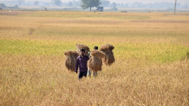 Critics Wrong, Notebandi Had No Effect On Agriculture