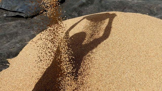 Government Estimates Signal Record Foodgrain Production Of 272 Million Tonnes In 2016-17
