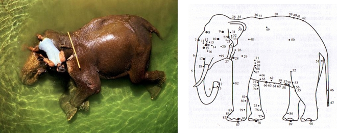 Left:Elephant with Mahout(National Geographic) Right: from  'Marma Chikitsa in Traditional Medicine' Courtesy: L.S.P.S.S Publication, Chennai<br>