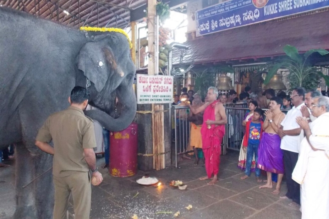 Gaja Pooja being performed to Yashaswini at the annual temple festival